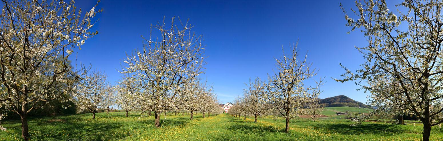 Frühling im baselland pano 31729